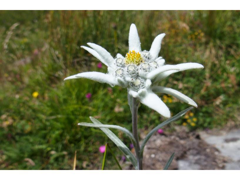 centre-edelweiss-vacance_01053036-.jpg