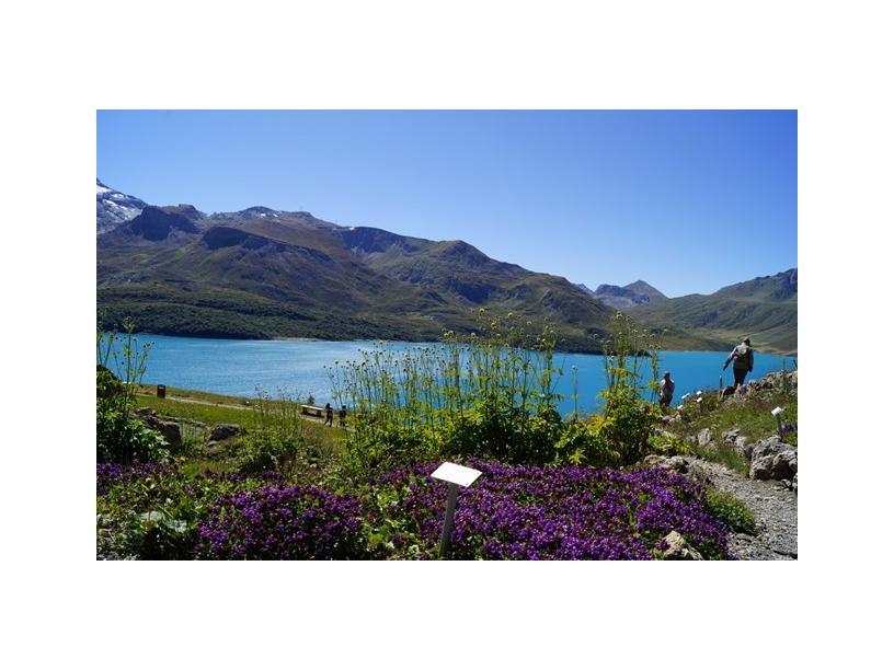 Les Edelweiss : Jardin Alpin du Mont-Cenis centre-edelweiss-vacance_74617138-.jpg