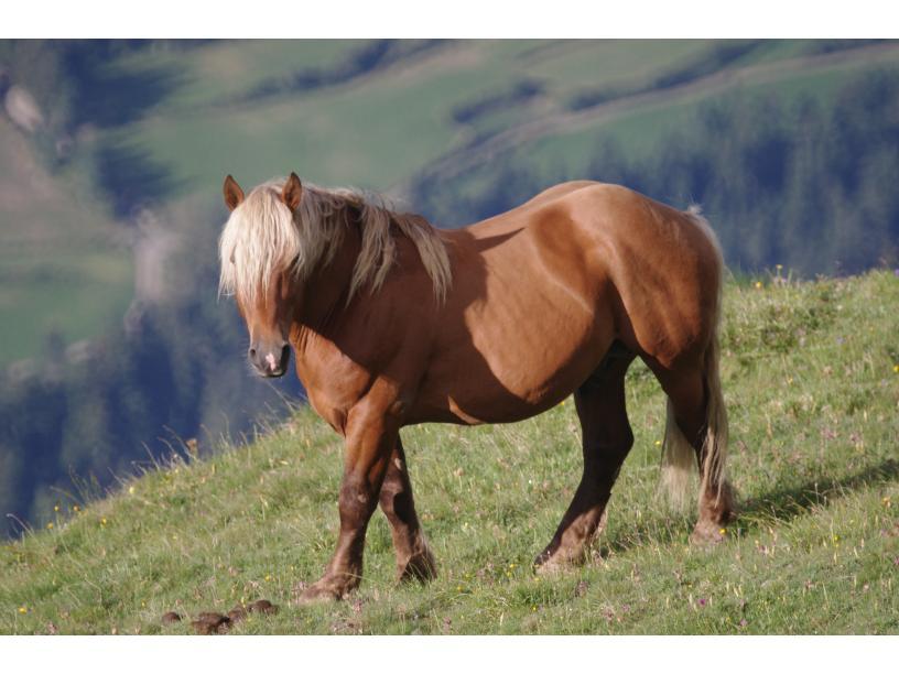 Les Edelweiss : Equitation centre-edelweiss-vacance_90150042-.JPG